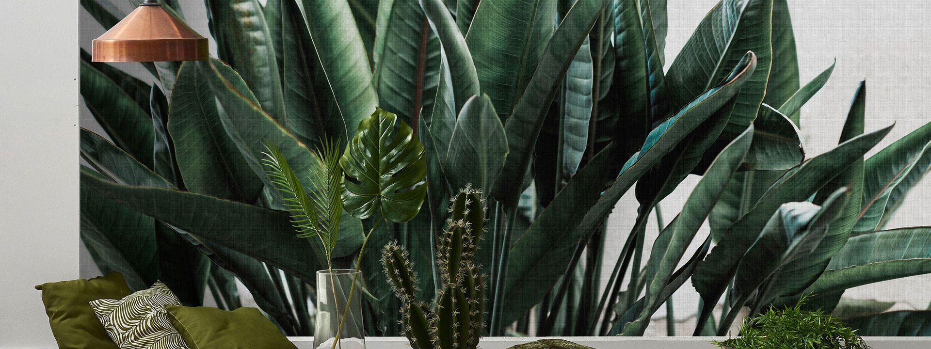 Dschungel Tapeten image